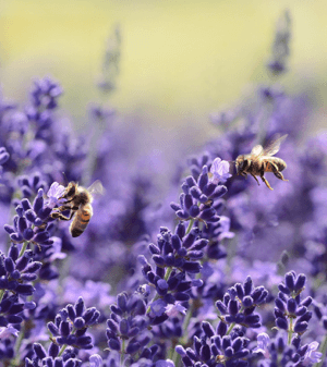 Tips for Celebrating Pollinator Week